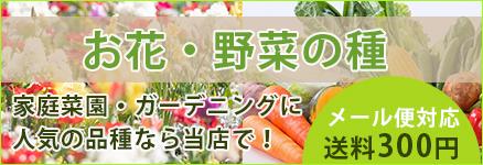 /common/banner/banner09.jpg